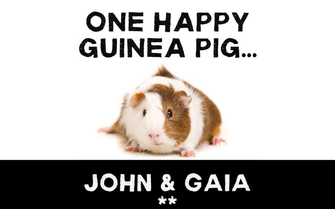 One Happy Guinea Pig…
